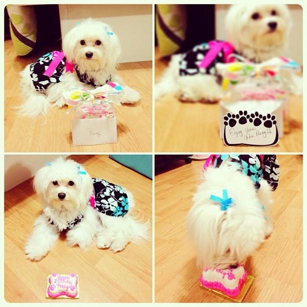 Happy 1st Birthday, Penny! I love you! | Just Penny | Pinterest