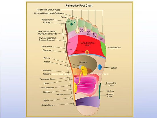 Anatomy terms of location