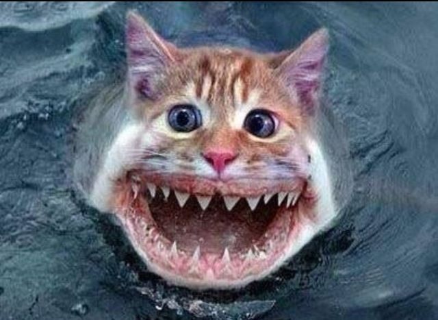 kat im a kitty cat