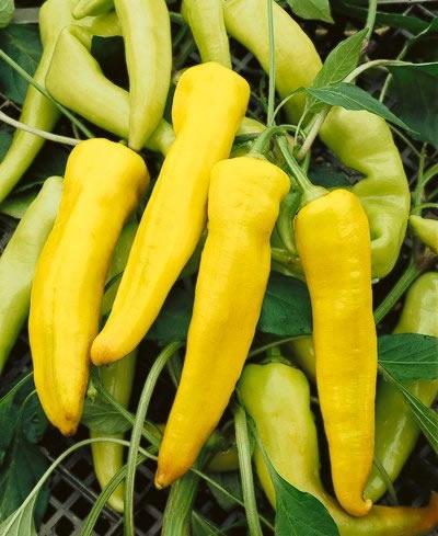 Sweet Banana Sweet Pepper Seeds | Edible Plant Parts ...