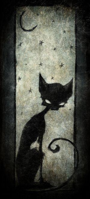 ♥ Black cat  ~