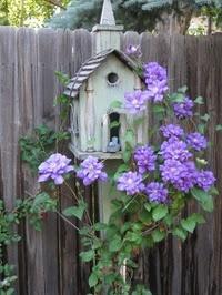 Using a birdhouse as a clematis trellis!