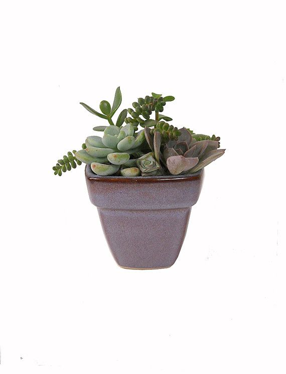 Small mixed succulent dish garden in a ceramic clay pot container gif - Dish garden containers ...
