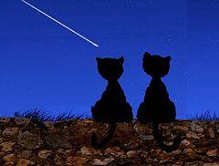 APPLIQUE CAT PATTERNS « FREE Knitting PATTERNS