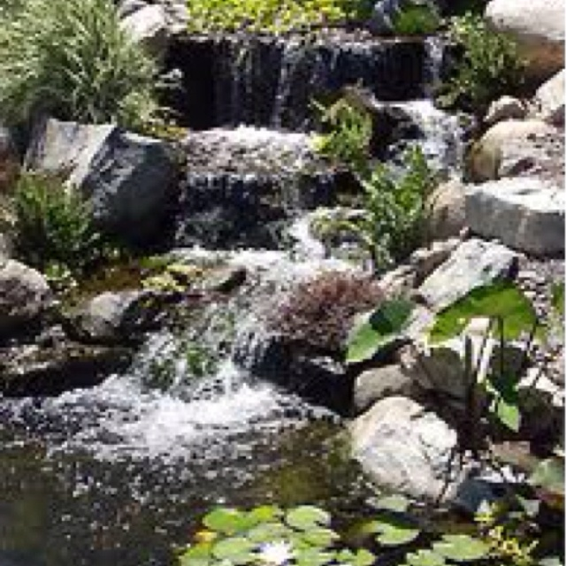 Love these fish pond waterfalls fish ponds pinterest for Fish pond waterfall