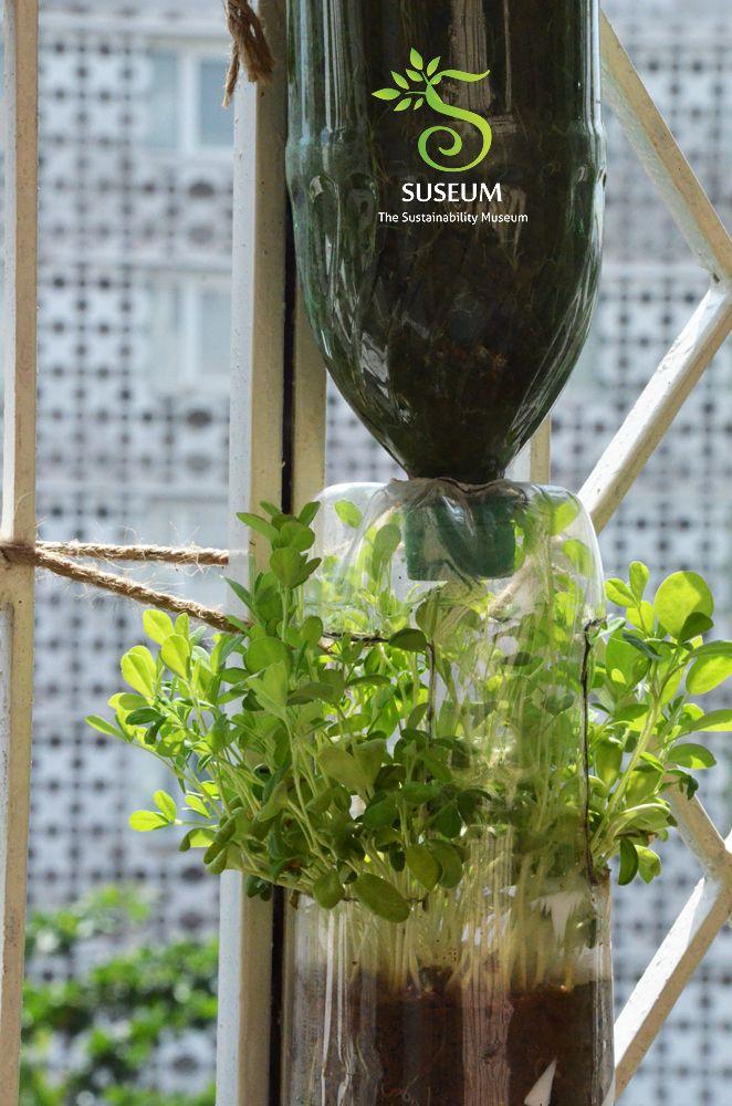 Vertical Garden Suseum Pinterest
