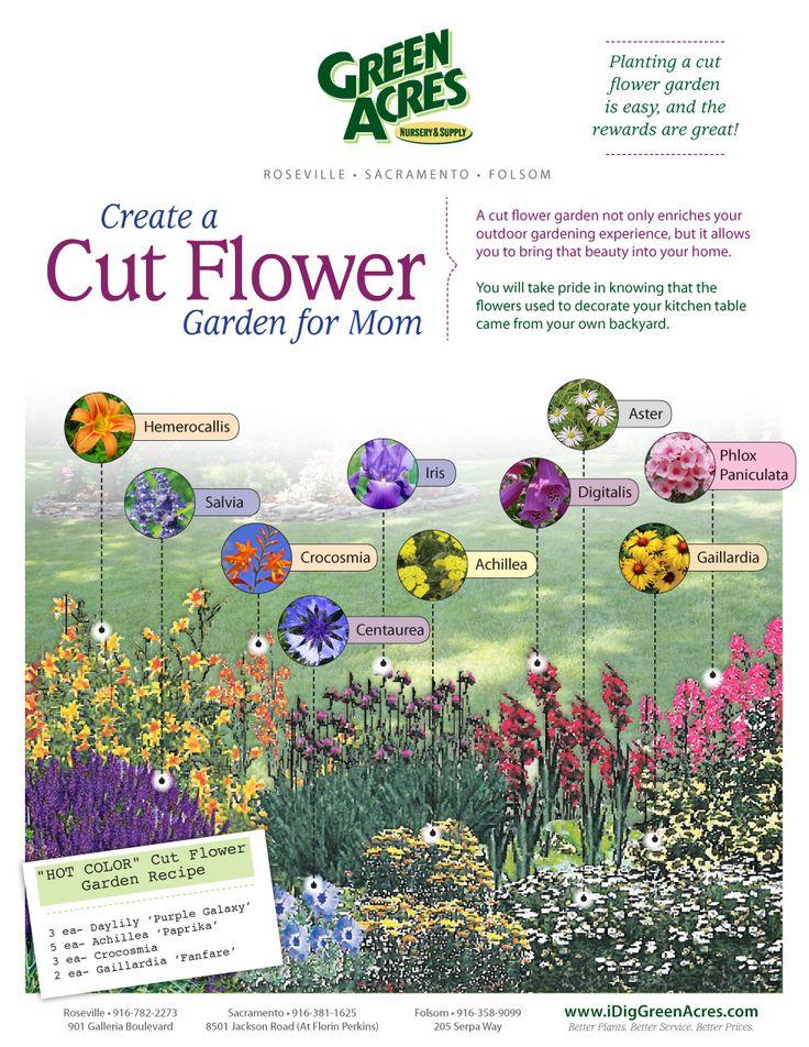 Cut Flower Garden Farmers market ideas Pinterest