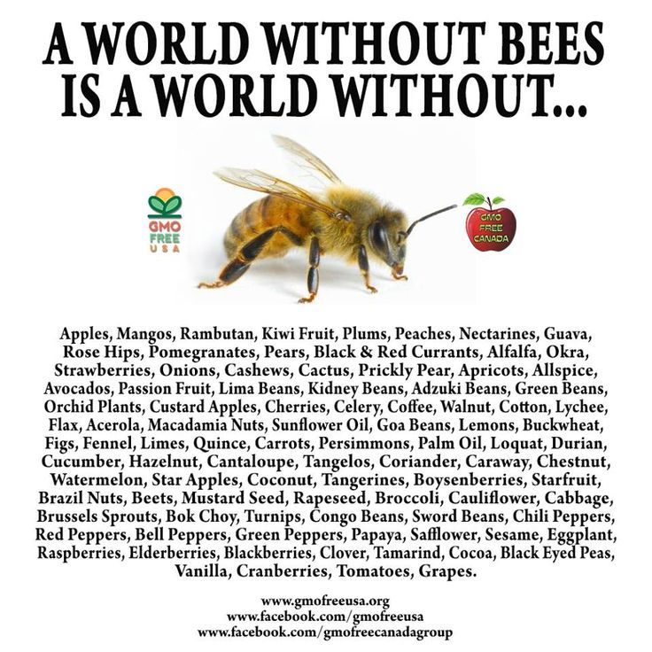 A WORLD WITHOUT BEES IS A WORLD WITHOUT: Apples, Mangos, Rambutan, Kiwi Fruit, Plums, Peaches, Nectarines, Guava, Rose Hips, Pomegranates, Pears, Black and Red Currants, Alfalfa, Okra, Strawberries, Onions, Cashews, Cactus, Prickly Pear, Apricots, Allspice, Avocados, Passion Fruit, Lima Beans, Kidney Beans, Adzuki Beans, Green Beans, Orchid Plants, Custard Apples, Cherries, Celery, Coffee, Walnut,... See More —