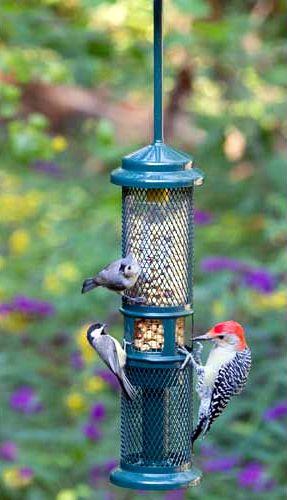 Squirrel Buster Peanut Plus Bird Feeder | Back Yard ...