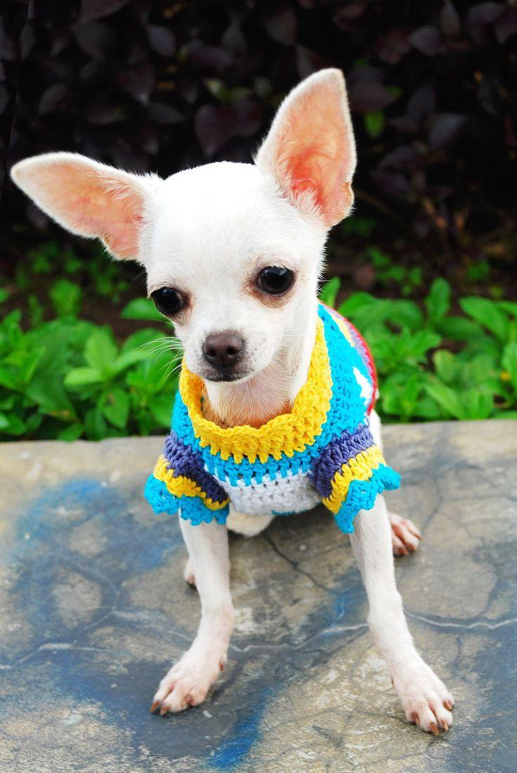 crochet dog sweater by myknitt cheewawas Pinterest