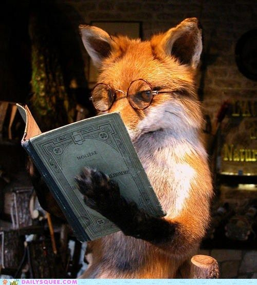 Clever Fox: Such A Clever Fox