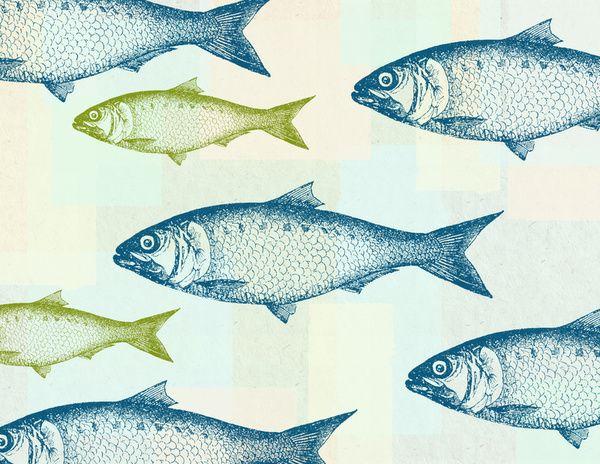 vintage fish art print by jacqueline maldonado
