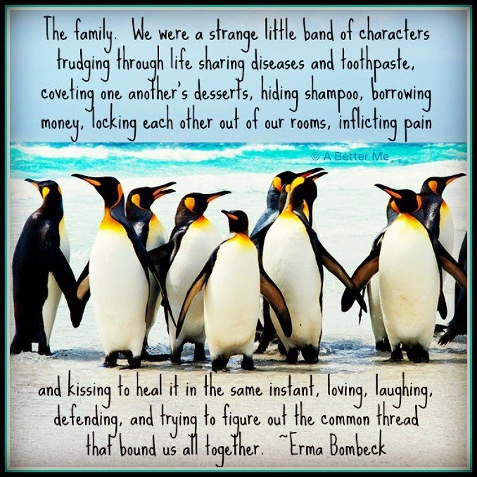 Penguin Love Quotes Impressive Penguin Love Quotes