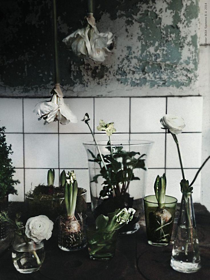 Gästbloggare: Adventsförväntan i full blom | Livet Hemma – IKEA