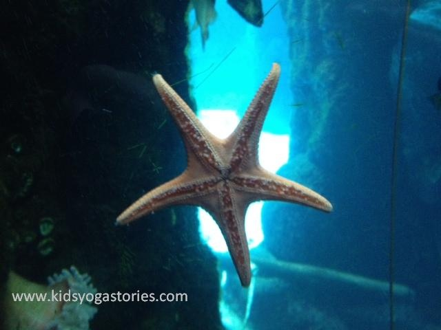 Sea Star ~ Resting (Corpse) Pose | Yoga Poses | Pinterest