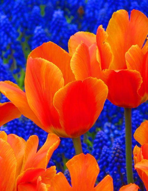 Complementary art pinterest - Colors that compliment orange ...