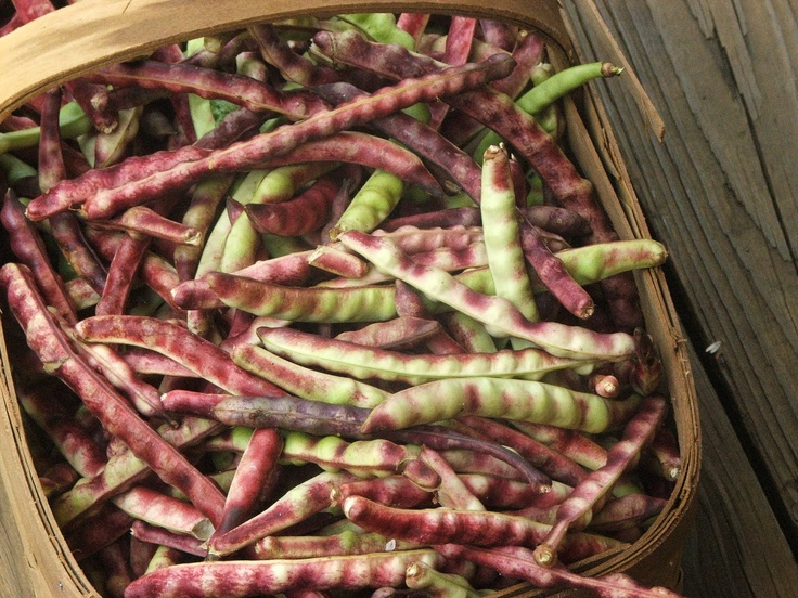 Purple Hull Peas ~ Fresh from the summer garden, and ready for ...