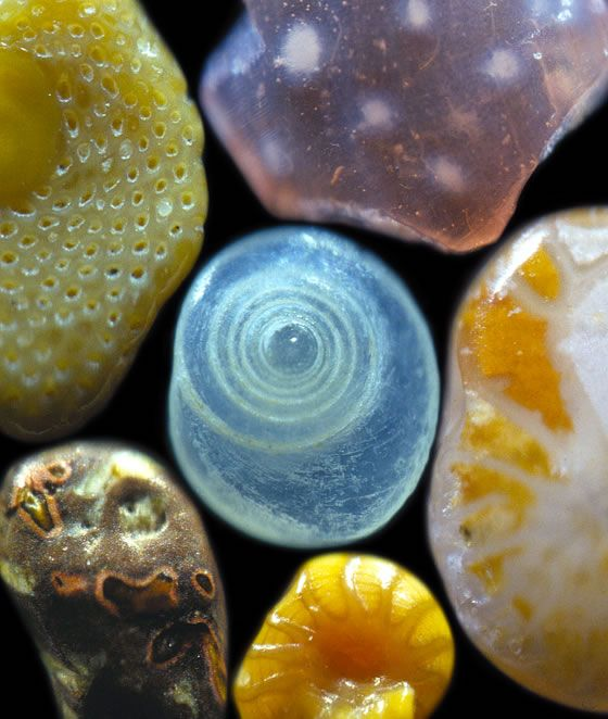 Magnification of interesting and colorful sand grains from around the world. Image Copyright © 2008 Dr. Gary Greenberg, All Rights Reserved.