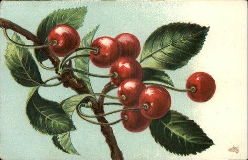 Tuck Luscious Fruit Cherries Embossed c1910 Postcard