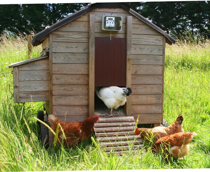 really want this automatic coop door chickens pinterest. Black Bedroom Furniture Sets. Home Design Ideas