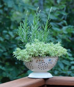Fun idea for planting herbs.