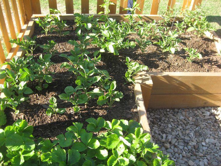 Pin by Shari Fultz Jones on Gardening tips ideas