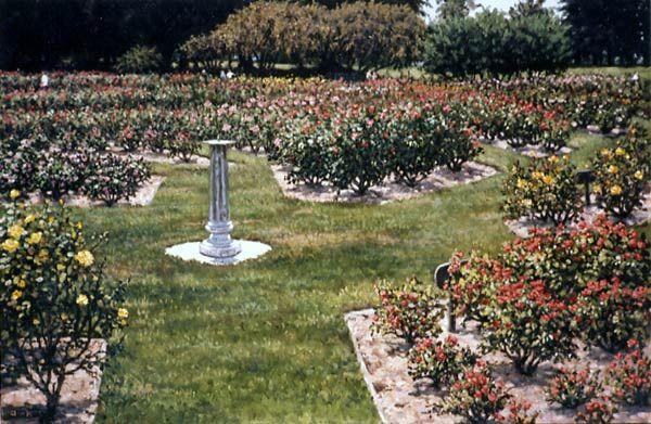 San Jose Municipal Rose Garden Travel Calif Big Cities