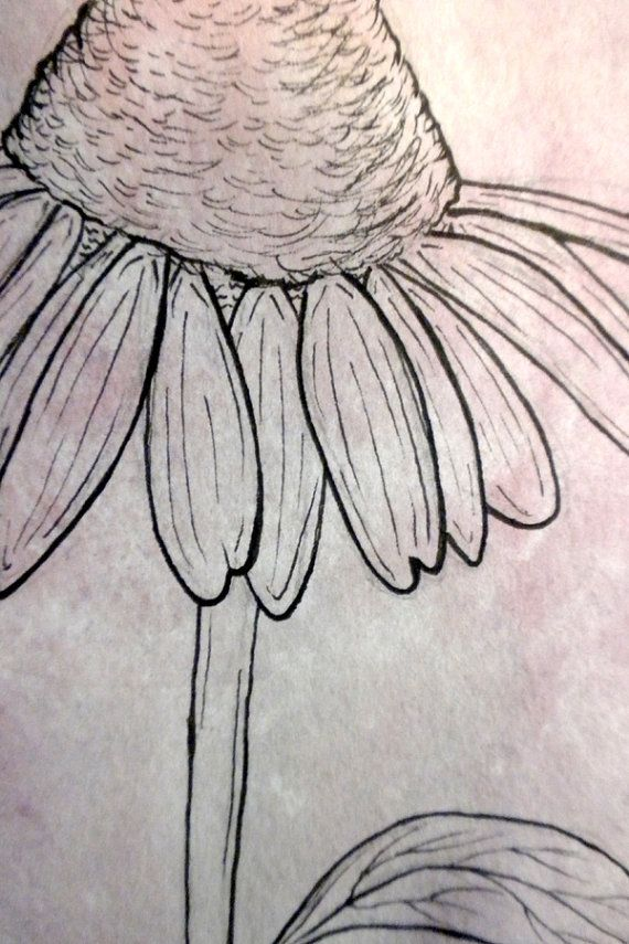 Line Drawing Coneflower : Purple cone flower line drawing original handmade