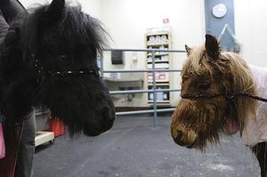The Dedham Transcript, Dedham Animal Rescue Center Cares for Recently Surrendered Mistreated Horses