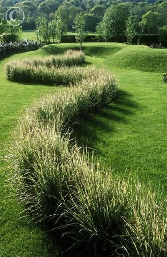 Variegated feather reed grass for the garden pinterest for Variegated ornamental grass