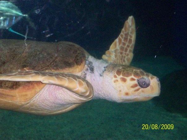 Virginia Beach Aquarium Places I 39 Ve Been Pinterest