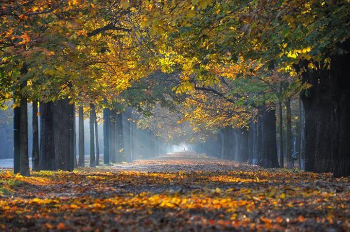Author: Barbara Hartl #MIMfall #contest #Manfrotto #Autumn #PIXI #imaginemore