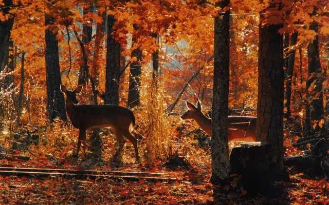 Fall scenery two deer fall pinterest for Deer scenery