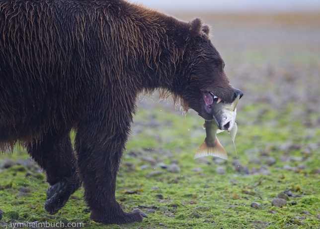 Wildlife of Katmai National Park: Why Preserving Wild Spaces Is Important