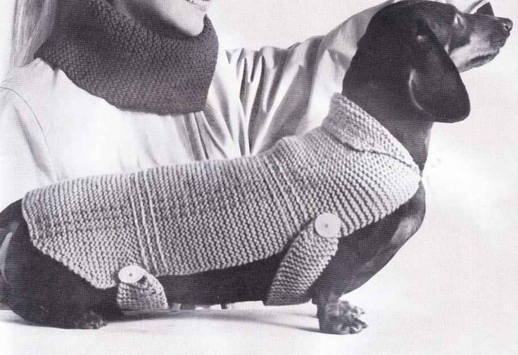 Pin by Darla Schalk on Knitted Dog Sweater Patterns Pinterest
