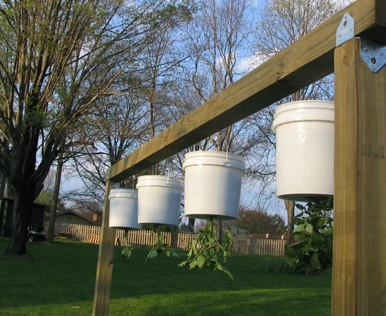 How to make a hanging support for an upside down tomato plant - Upside down gardening ...