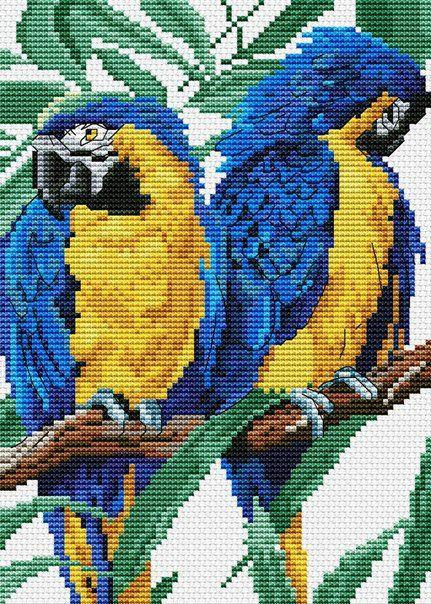 Вышивка крестом два попугая 60