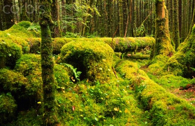 Great Bear Rainforest -- Corbisimages.com