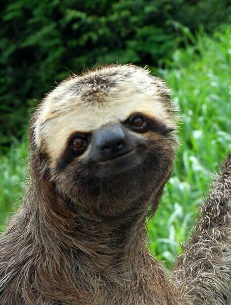 sloth smiles | animals | Pinterest