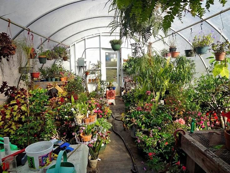 Greenhouse in winter garden ideas pinterest - Gardening mistakes maintaining garden winter ...