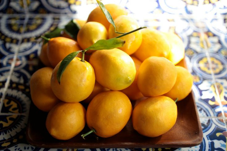 Limoncello- lemons, vodka, sugar- shake daily for about a week. strain ...