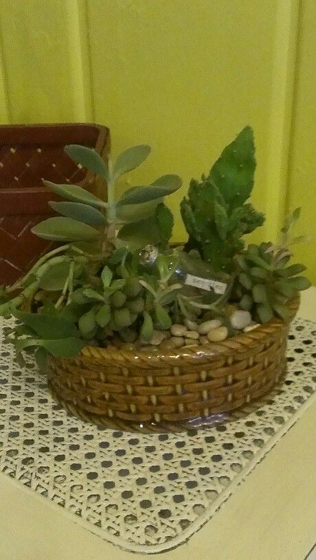 Image Result For Dish Garden