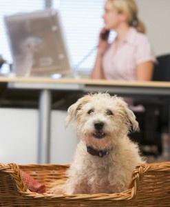 doggie home remedies