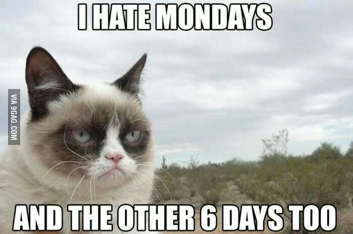 i hate mondays and the other 6 days too grumpy cat