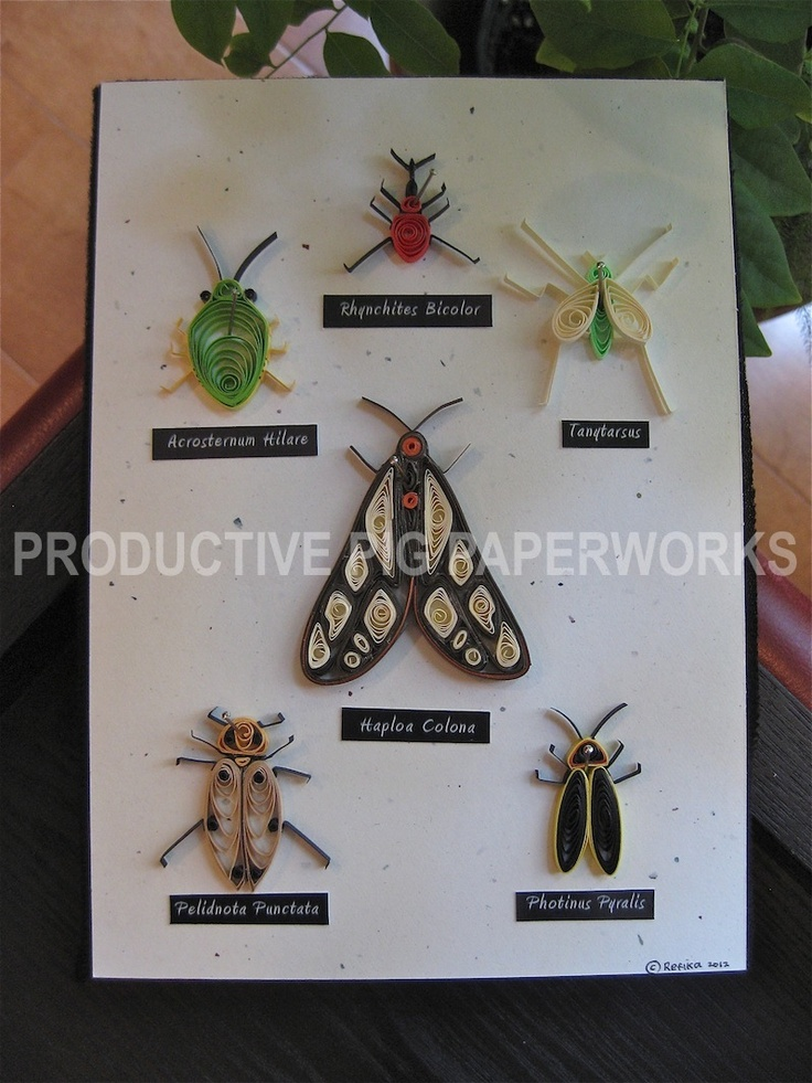 Paper Insects Collection