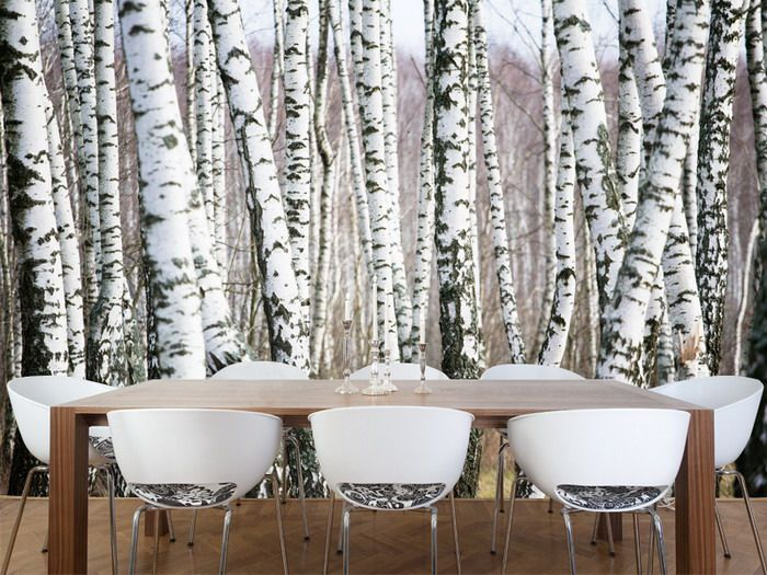 Birch forest wall mural condo pinterest for Diy birch tree mural
