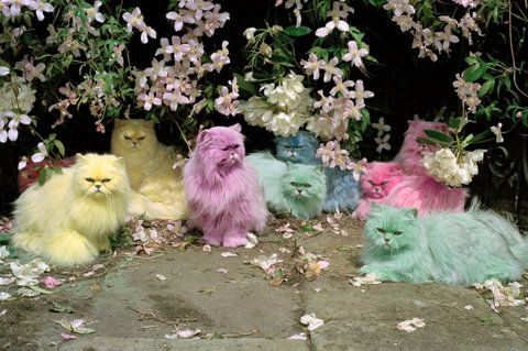 Colorful cats #pets