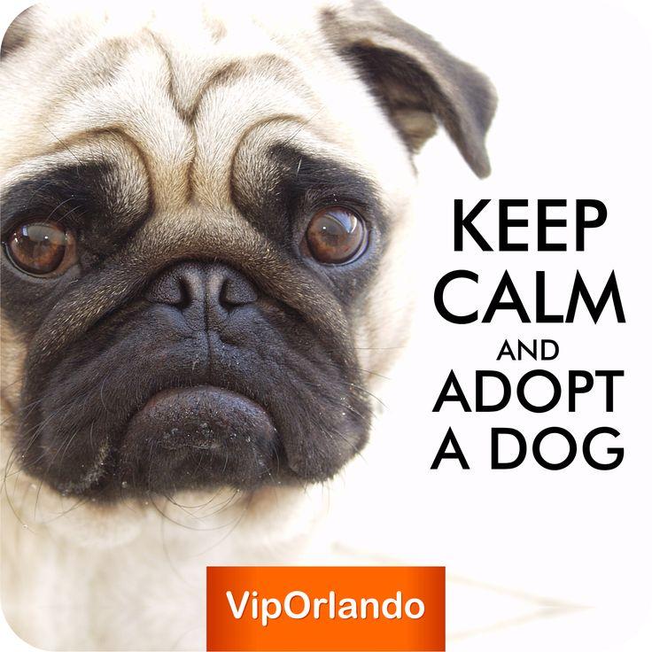 keepcalm and adopt a dog keep calm pinterest