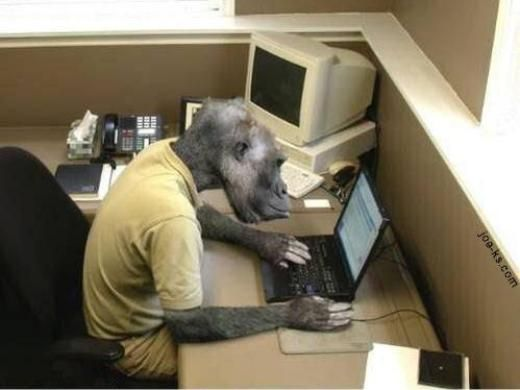 funny monkey playing computer