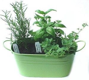 home garden gardening article planting success tips help your herbs thrive